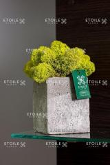 Moss Reindeer lichen lime Box of 4 kg