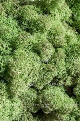 Мох Ягель светло зеленый 1 кг