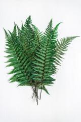 Fern Parsheman green