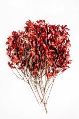 Branch pittosporum red Code. PIT/0203