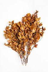 Branch pittosporum orange