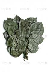 Roza Listya green
