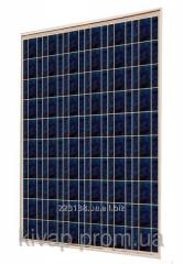 PVмодуль ABi-Solar CL-P60250, 250 Wp, POLY Днепр