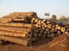 Отходы лесозаготовок продажа,  опт Коростень,