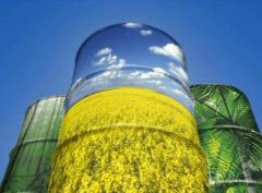Rape oil for production of the biodiesel
