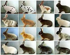 Equipment for rabbit breeding