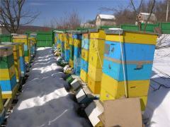Пчелосемья, Пчелопакеты, Пчеломатки