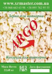 Corn for ARGO popcorn