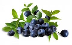 Blueberry organic (transition period)
