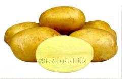 Potatoes Impala (Agriko)