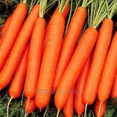 Carrots Atilio's Grade