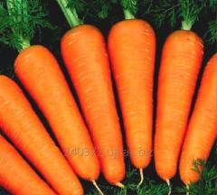 Carrots Abako's grade