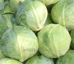 White cabbage Ankom's Grade