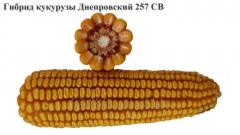 Corn Dnieper 257 CB