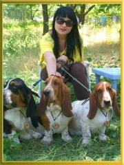 """Nursery of basset hounds of """"Breenbrass"""