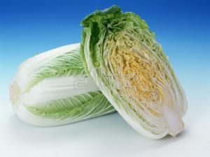 Beijing cabbage wholesale