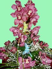 Букет поздравительный орхидея