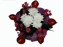 Bouquet congratulatory Warm history