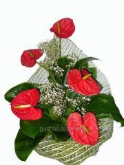 Bouquet congratulatory Bright passion