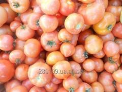 Ми вирощуємо овочі: помідор, огірок, кабачок,