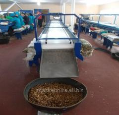 Line of processing of a nut (Orekhokol, Vibrosyto,