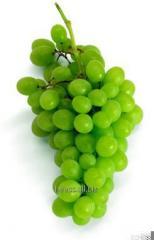 Виноградная косточка скраб 500