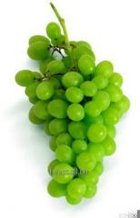 Grape seed srub 500