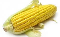 Corn seeds Lyubava of 279 MV (harvest of...