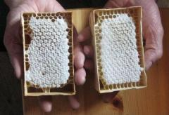 Medical in cells, comb honey - May, in