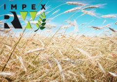 RW Impex from Ukraine exports Barley (barley