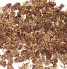 Хитозан (подмор пчел)