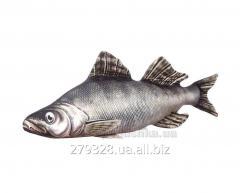 Decorative pillow fish of Hanibaba Pike perch,