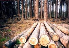 We buy a round timber of a pine and an acacia the