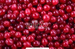 The red currant frozen from the producer and is a