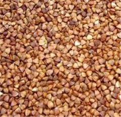 Buckwheat wholesale, Buckwheat in Ukraine to Buy,