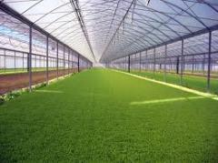 Greenhouses are film, film greenhouses, to buy