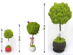 Топиарий, дерево из декоративного мха. Свежесть -