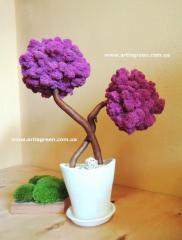 Особое растение из живого мха