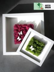 Desktop photoframework with a moss from