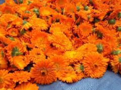 Календула лекарственная, Цветы календулы, Цвет