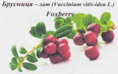 Cowberry berries frozen