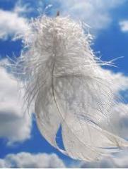Пух и перья гусиные и утиные