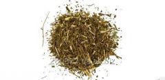 St. John's Wort grass