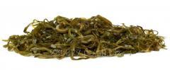 Laminaria sea cabbage