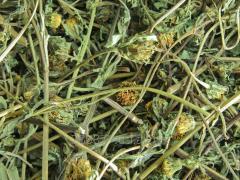 Train grass