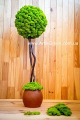 "Дерево из мха, топиарий ""Artis Tree - 50"