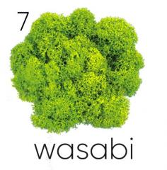 The stabilized moss. Artis Wasabi 07 color