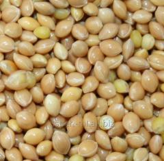 Millet yellow organic