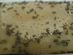 Пчелопакеты Киевская область