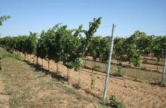 Виноградные опоры